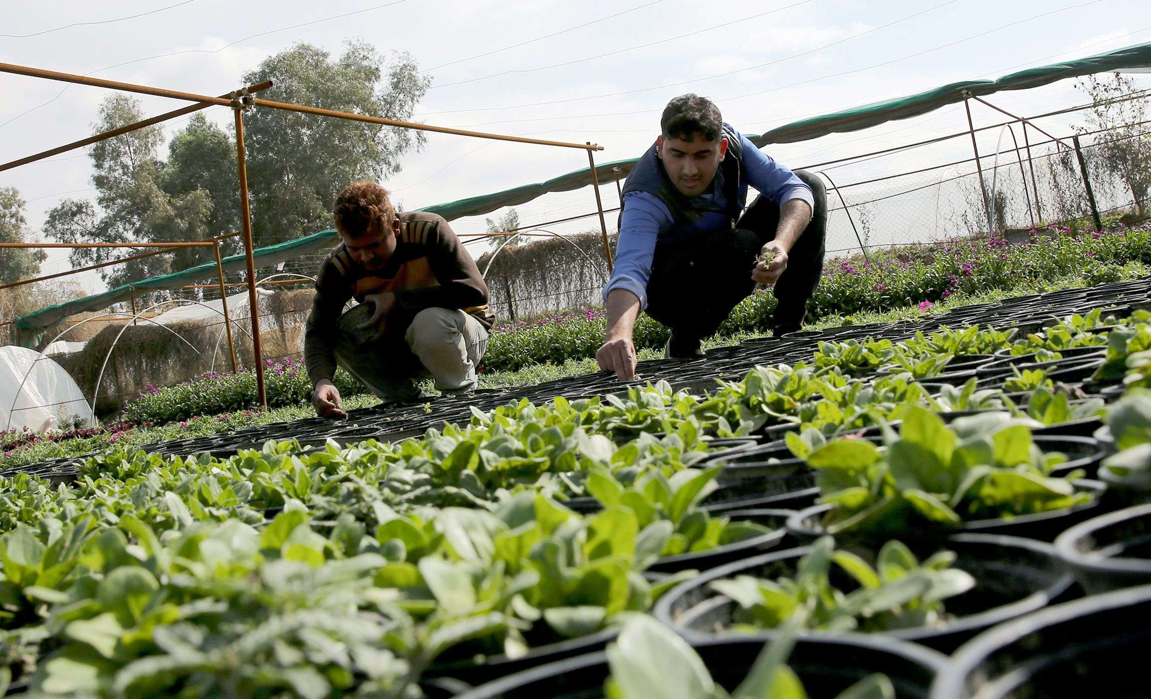 Huge potential. Iraqi workers work at a field in Baghdad. (AFP)