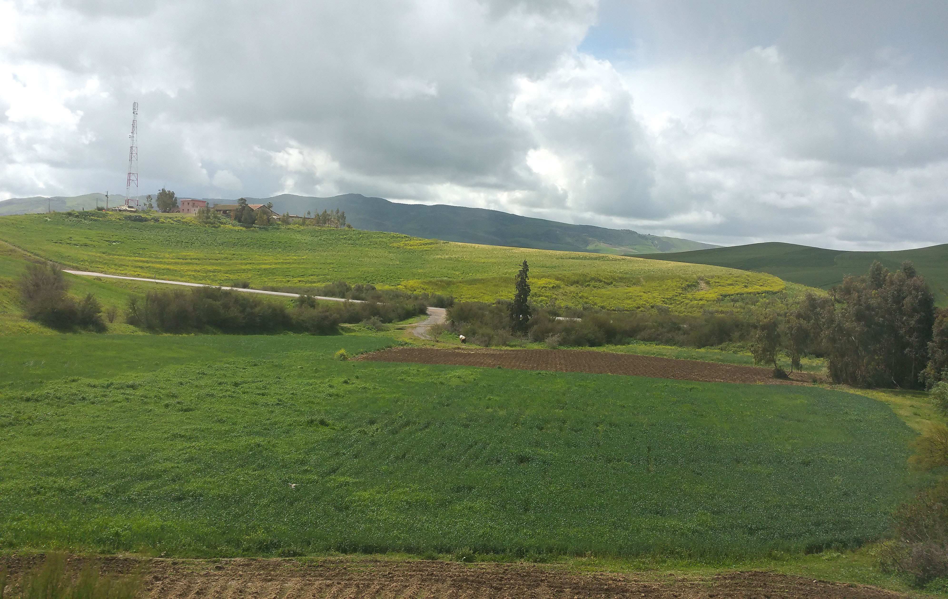 Favourable season. An agricultural land in Meknes region. (Saad Guerraoui)
