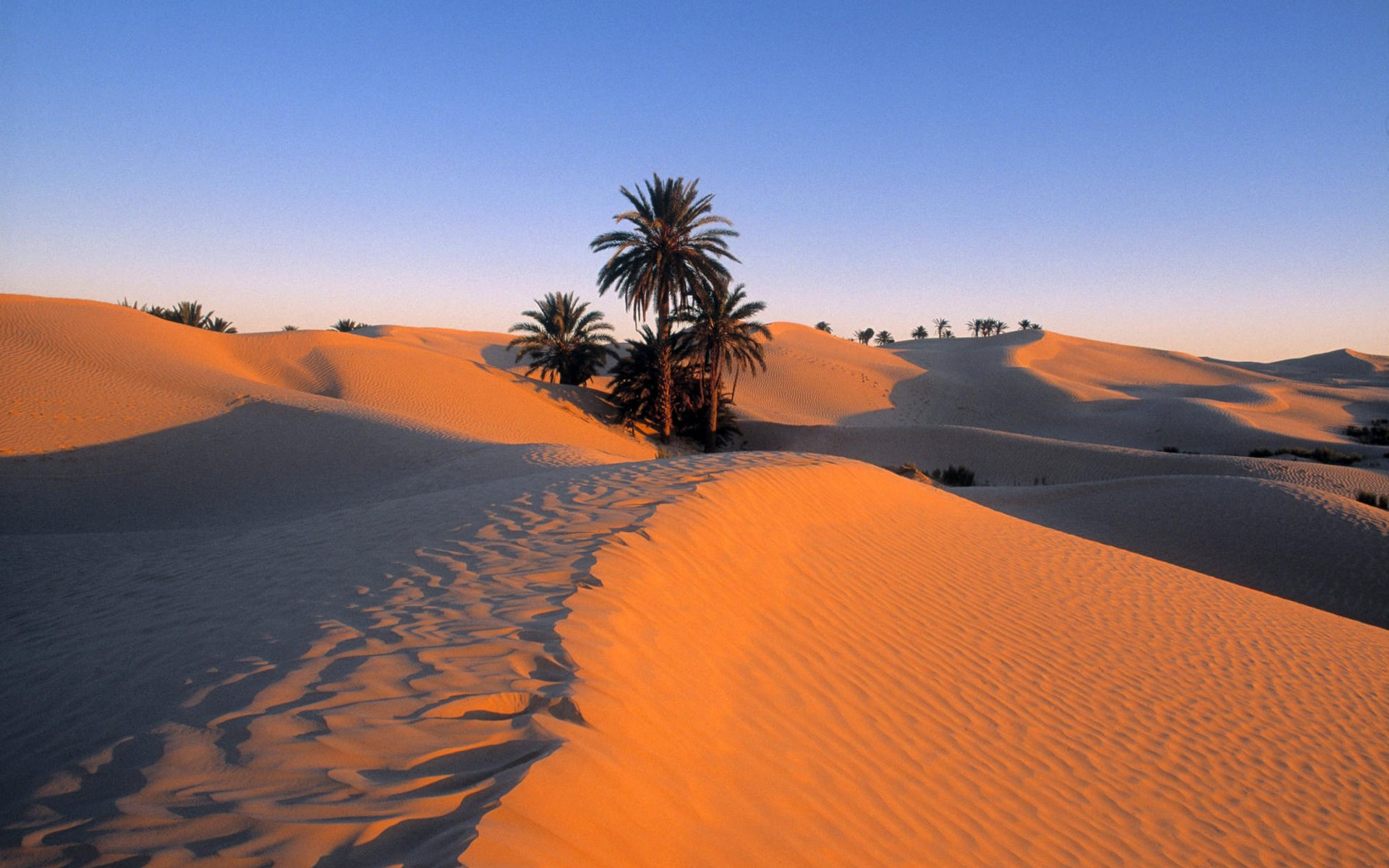A view of the desert in Tunisia's southern city of Douz. (Ministry of Tourism)