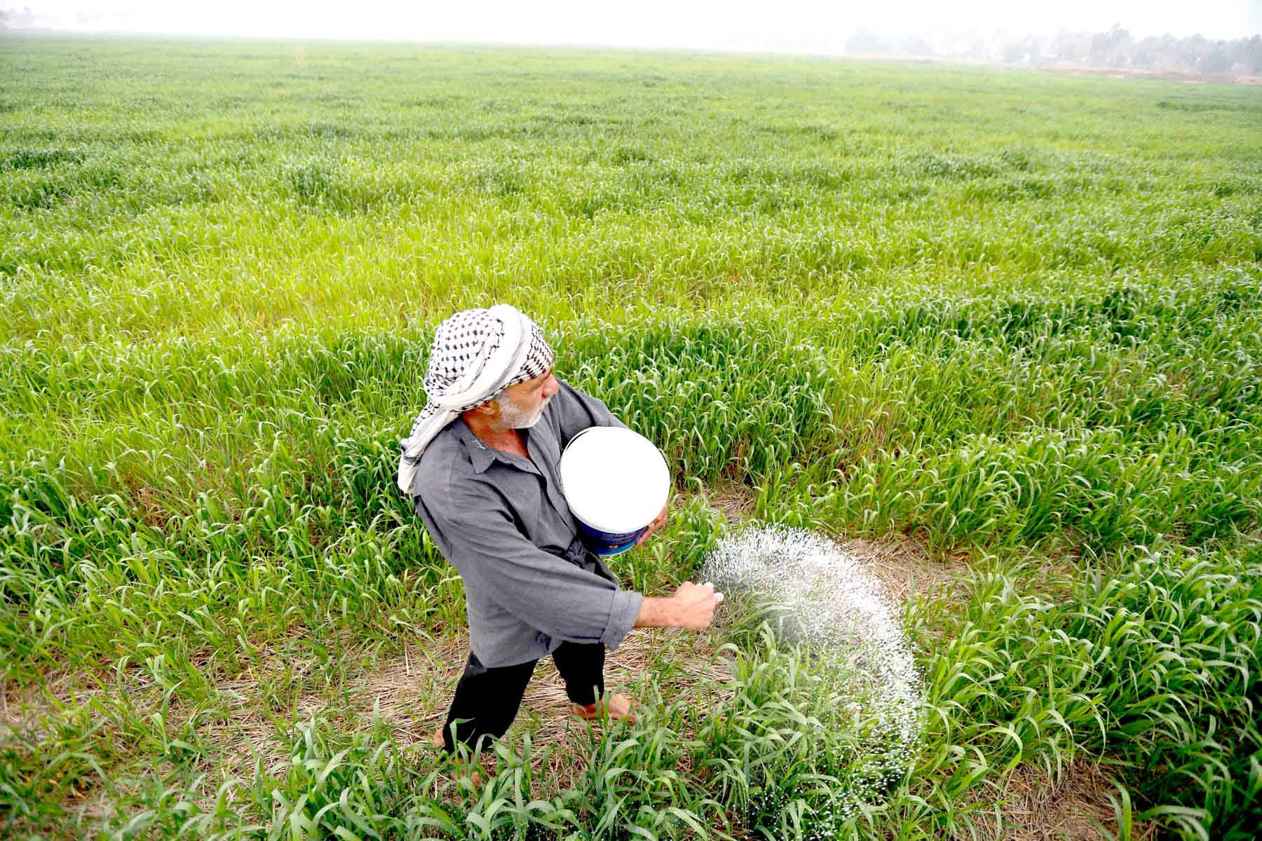 Vulnerable sector. An Iraqi farmer plants Jasmin rice in the Mishkhab region in central Iraq. (AFP)