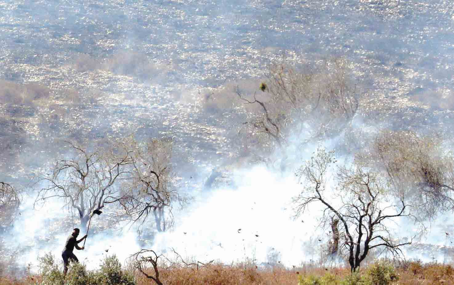 A Palestinian tries to extinguish a fire in an olive grove near the Palestinian village of Burin in the northern West Bank after an attack by Israeli settlers, October 16. (AFP)