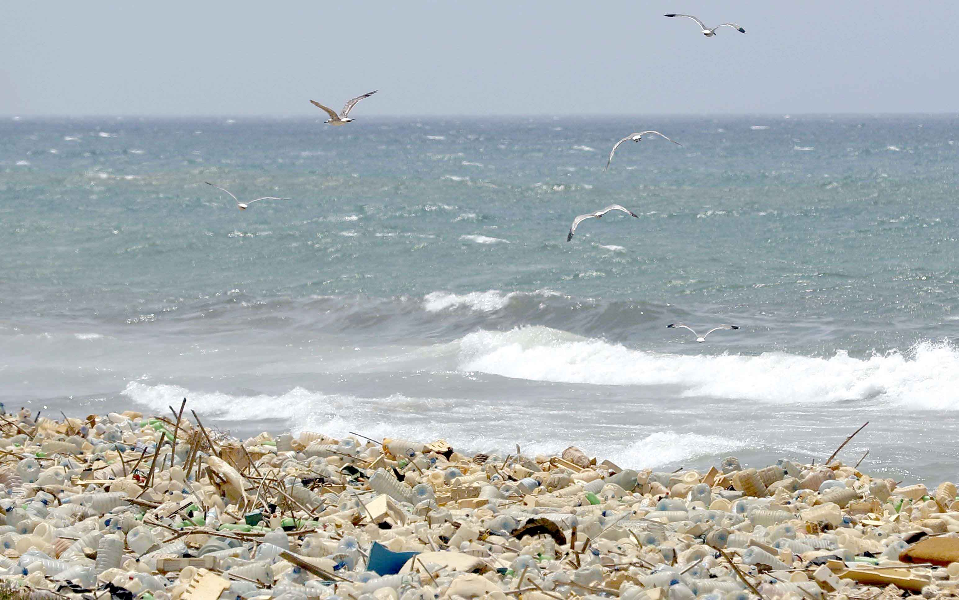 Environmental dilemma. Seagulls search for food near a sewage discharge area next to piles of plastic bottles on the seaside of Ouzai in Lebanon. (AFP)
