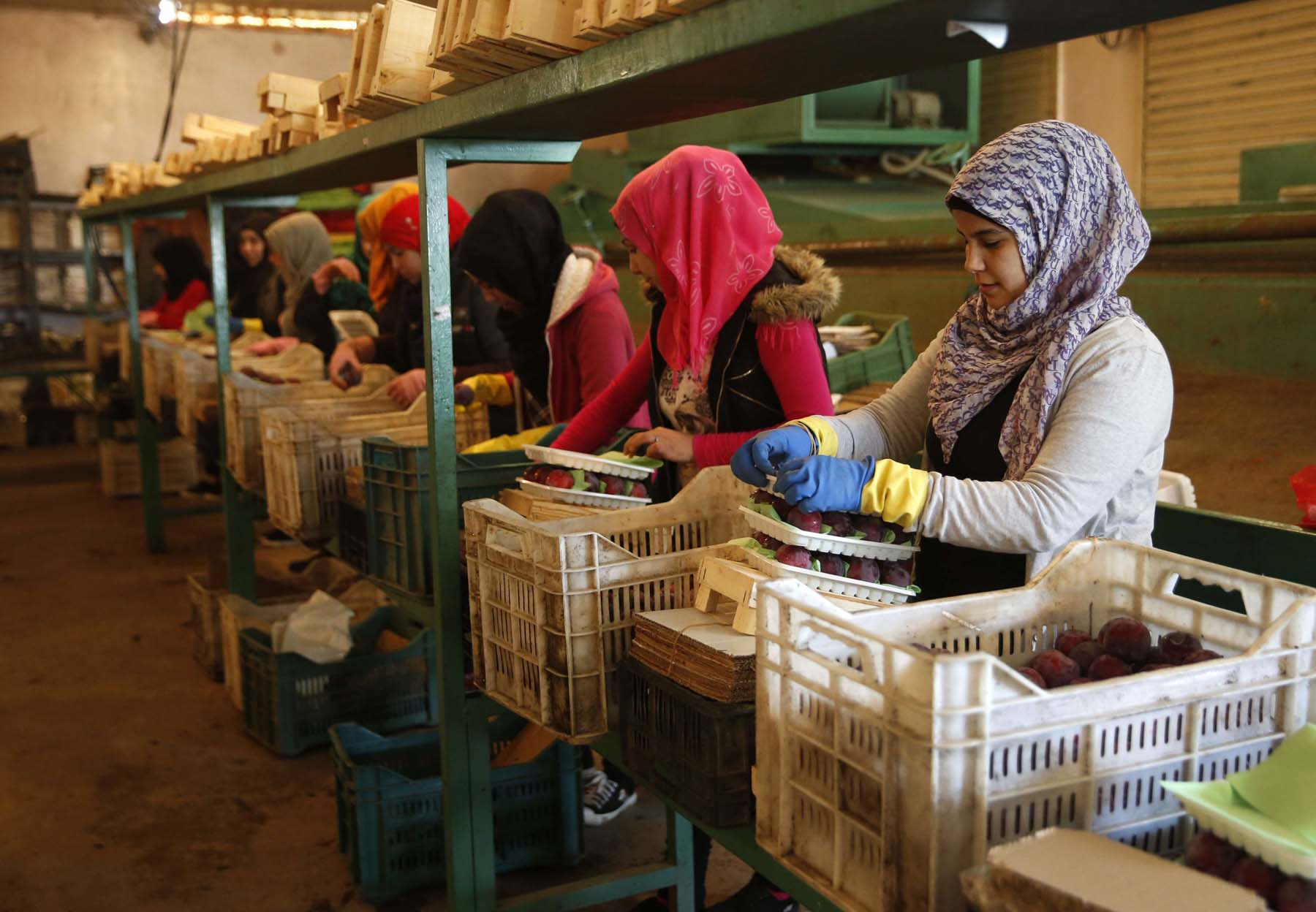 Workers pack fruit for export from Lebanon to the Gulf and other Arab countries, at a warehouse in the Bekaa Valley, Lebanon. (AP)