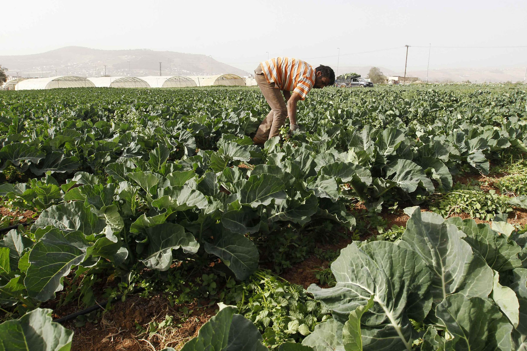 A farmer works in a plantation near the Jerash stream, which flows into the King Talal Dam, near Jerash, Jordan. (Reuters)