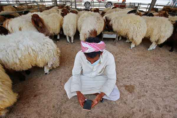 A vendor clad in mask due to the COVID-19 coronavirus pandemic browses a phone while sitting inside a sheep pen at a livestock market in Kuwait City on July 28, 2020. (AFP)