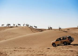 Visitors ride a vehicle on a tour of the Dubai Desert Conservation Reserve. (DDCR)