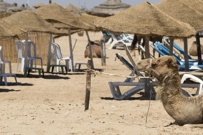 A camel sits on a beach in the resort of Gammarth. (AFP)