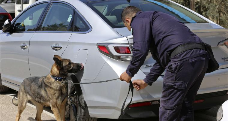 A 3-year-old German shepherd trained in the United States sniffs for explosives in a drill at the K-9 compound of the Jordanian police in Amman, on March 19. (AP)