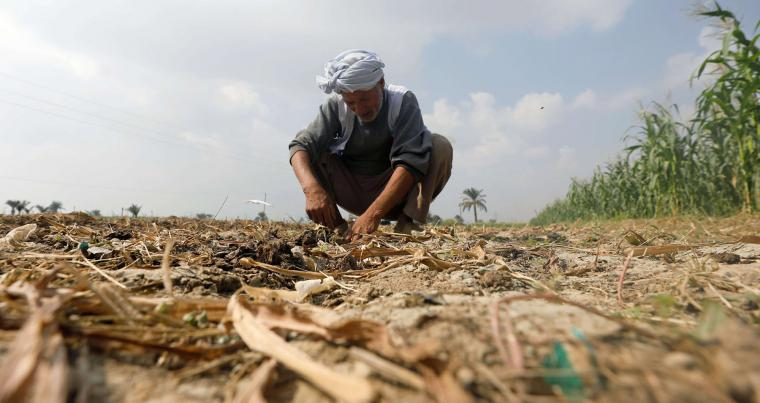 A farmer works at his farmland of Fayoum, southwest of Cairo, Egypt. (Reuters)