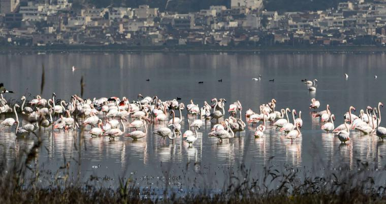 Conservationists cry foul over construction threat to Tunis lagoon's bird life. (AFP)