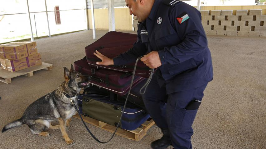 A handler from the K-9 unit of Jordan's police directs an explosives sniffing German shepherd during a drill in which C-4 explosives were hidden in a suitcase meant to simulate airport luggage checks, in Amman,  on March 19. (AP)
